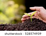 men hand are planting the... | Shutterstock . vector #528574939