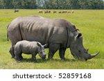 Stock photo white rhinoceros with weeks calf 52859168