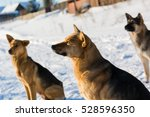 the dog to villages sits on... | Shutterstock . vector #528596350