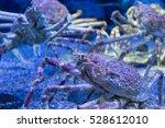 Small photo of Alaska crab in aquarium at Osaka, Japan