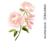 pink peony branch in watercolor.... | Shutterstock . vector #528616864