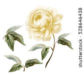 white watercolor peony in... | Shutterstock . vector #528646438