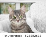 Stock photo cute cat in soft pet bed close up 528652633