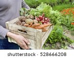 Stock photo midsection of woman carrying crate with freshly harvested vegetables in garden 528666208