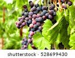 Ripe Tasty Grapes Cluster ...