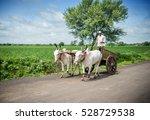 indian farmer riding bullock... | Shutterstock . vector #528729538