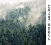 forest mountain with the...   Shutterstock . vector #528805696