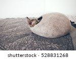 Devon Rex Cat Is Sleeping In...