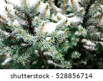 Fir Tree Branches Covered With...