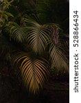 rain forest plants   vegetation ... | Shutterstock . vector #528866434