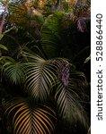 rain forest plants   vegetation ... | Shutterstock . vector #528866440