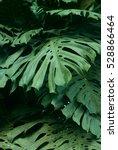 rain forest plants   vegetation ... | Shutterstock . vector #528866464