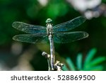 Dragonfly  Dragonfly In Natura...