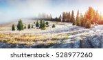 sunlight in the green forest... | Shutterstock . vector #528977260