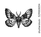 moth. insect. hand drawn.... | Shutterstock . vector #529003054