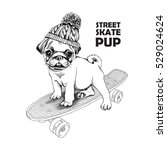 pug puppy in a knitted hat with ... | Shutterstock .eps vector #529024624