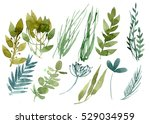set of herbs and leaves painted ... | Shutterstock . vector #529034959
