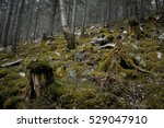 Mossy Undergrowth In Mountain...
