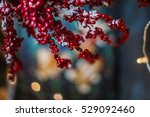 Branches With Red Berries...