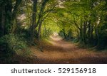 halnaker ancient green lane in... | Shutterstock . vector #529156918