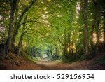 Halnaker Ancient Green Lane In...
