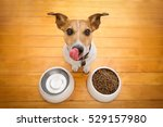 Stock photo hungry jack russell dog behind food bowl and licking with tongue isolated wood background at 529157980