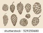 pine cones of cedar spruce fir... | Shutterstock .eps vector #529250680