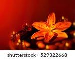 beautiful spa composition ... | Shutterstock . vector #529322668
