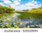 Florida Wetland  Air Boat Ride...