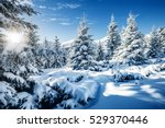 majestic white spruces glowing... | Shutterstock . vector #529370446