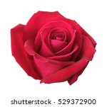 red rose isolated on white... | Shutterstock . vector #529372900