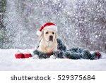 Labrador Dog Posing In A Santa...