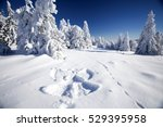 Snow Angel On Clean Snow In Th...