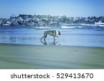 dog on beach playing with waves ... | Shutterstock . vector #529413670