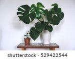 monstera deliciosa | Shutterstock . vector #529422544