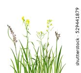 watercolor drawing green grass... | Shutterstock . vector #529441879