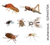 realistic icons insects | Shutterstock .eps vector #529445704
