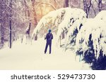 branches of thuja covered with... | Shutterstock . vector #529473730
