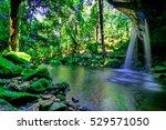 beautiful tropical rainforest... | Shutterstock . vector #529571050