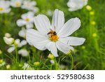 Small photo of Amazing many beautiful blooming white flower adsorbed sunlight in the garden