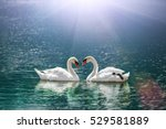 Beautiful white swan in heart...