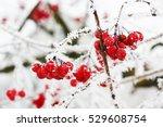 winter frozen viburnum under... | Shutterstock . vector #529608754