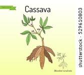 cassava  manihot esculenta   or ...   Shutterstock .eps vector #529610803