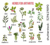 herbs to fight arthritis ... | Shutterstock .eps vector #529619890