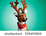 close up portrait of funny... | Shutterstock . vector #529693003