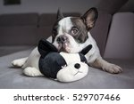 french bulldog lying with his... | Shutterstock . vector #529707466