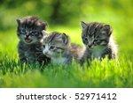 Three Striped Kittens Sitting...