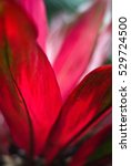 red petals   tropical exotic... | Shutterstock . vector #529724500