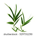 green bamboo leaves isolated on ... | Shutterstock . vector #529731250