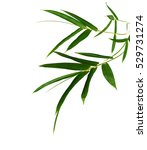 green bamboo leaves on a white... | Shutterstock . vector #529731274